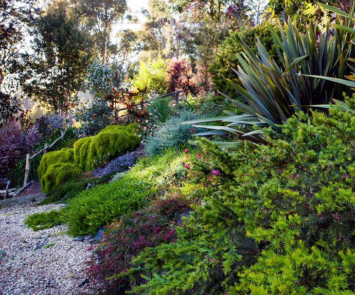 Australian native flower garden