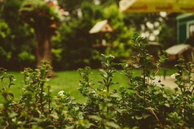 Blurred image of backyard